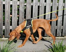 Suchhunde-Training bei Muenchen