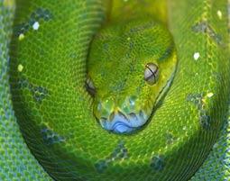 Reptilien-Tierpfleger fuer einen Tag